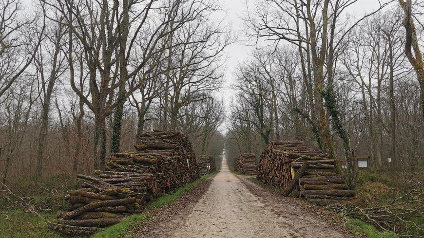 """Pétition contre la """"déforestation"""" de Bouconne : la forêt n'est pas plus exploitée qu'avant selon l'ONF"""