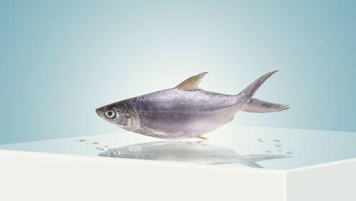 De la mer à l'assiette, la pêche durable a tout bon !