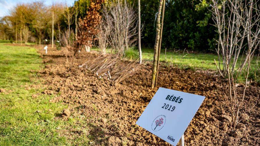 Tours : la ville plante 500 bébés-arbres pour célébrer les 500 naissances de 2019