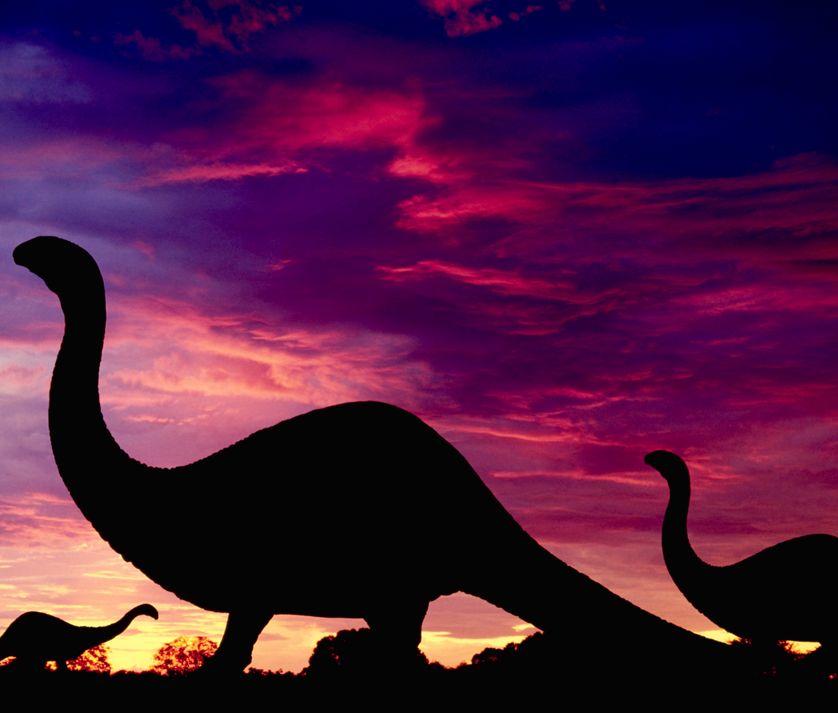 Les dinosaures, des animaux à sang chaud