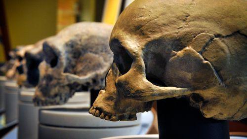 La découverte du plus ancien métissage humain