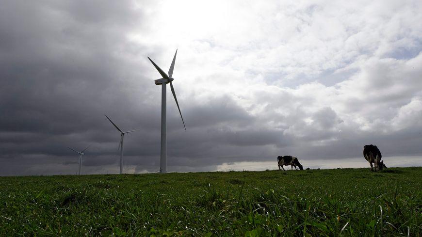 Indre-et-Loire : les éoliennes et lignes à haute tension, dangereuses pour les animaux ?
