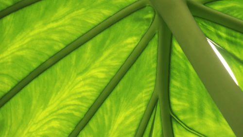 Des robots qui imitent la physiologie des plantes