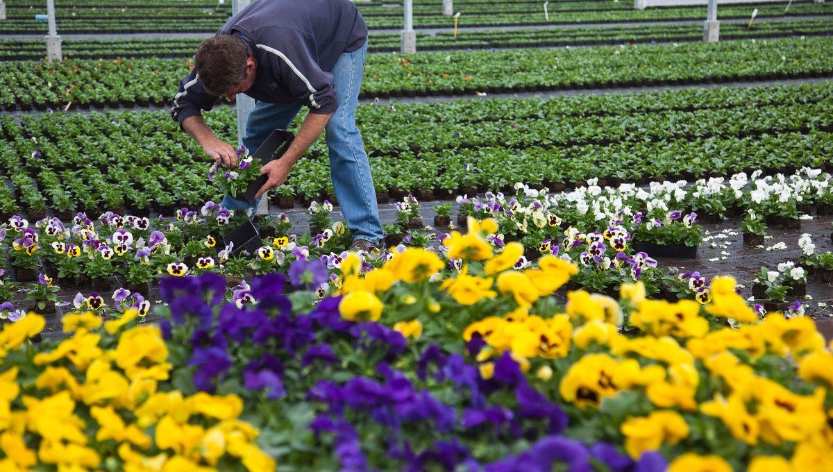 Horticulteur Val D Oise confinement face au coronavirus : les horticulteurs de la