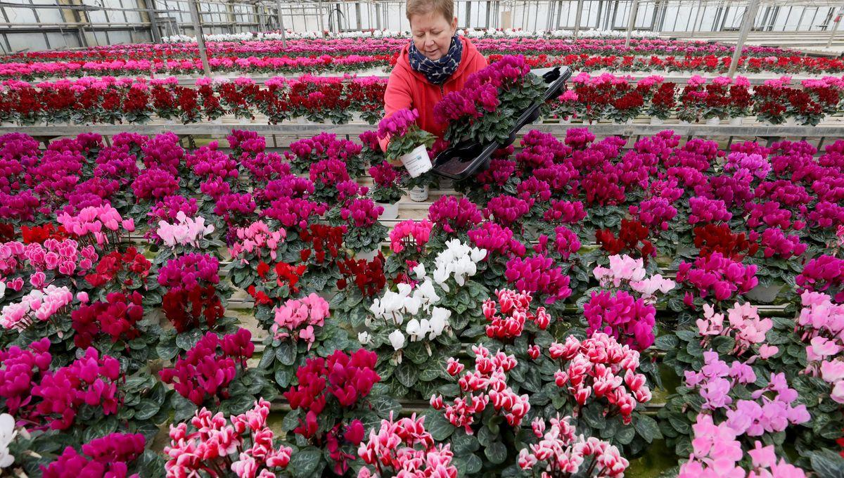 Jardinerie Pas Cher Toulouse le confinement arrive au pire moment de l'année pour les