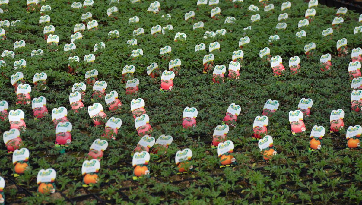 Jardinerie Pas Cher Toulouse coronavirus - confinement : la vente de plants potagers