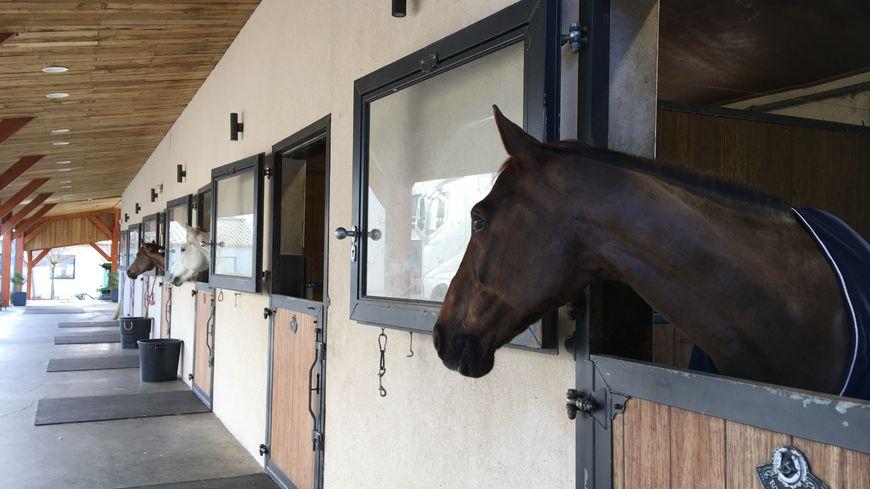 Coronavirus : les propriétaires de chevaux peuvent désormais aller  s'occuper de leurs animaux