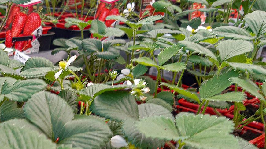 Coronavirus Les Jardineries Rouvrent Partiellement En Vaucluse