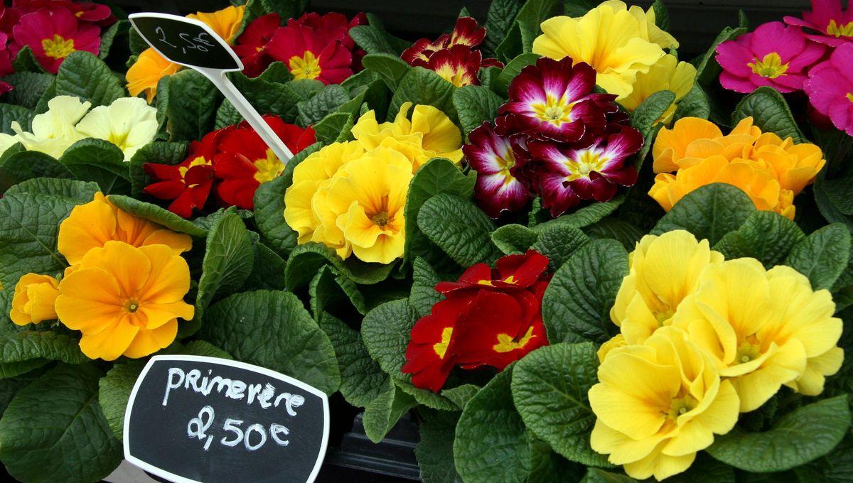 """Horticulteur Val D Oise on a dû jeter toutes nos plantes de printemps"""" : le désarroi"""