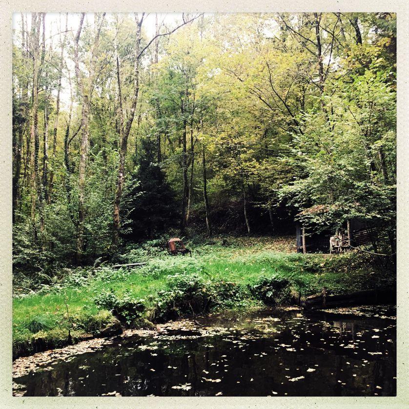 4 expériences de retour à la nature – série de podcasts à écouter – France Culture