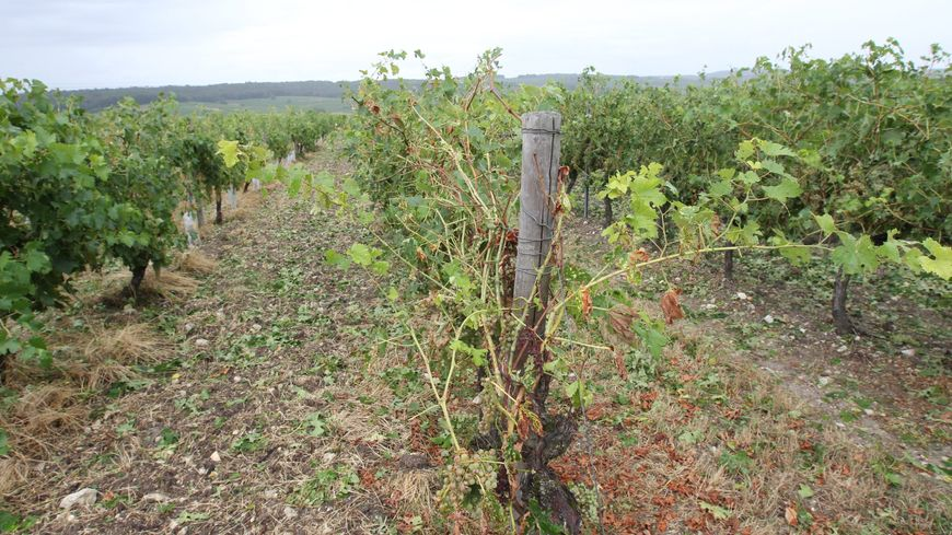Gr le dans le bordelais 600 800 hectares touch s selon - Chambre d agriculture franche comte ...