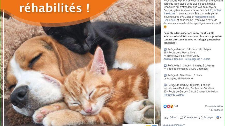 77 Animaux De Laboratoire A L Adoption Dans Les Refuges Spa D Isere De Savoie Et De Haute Savoie
