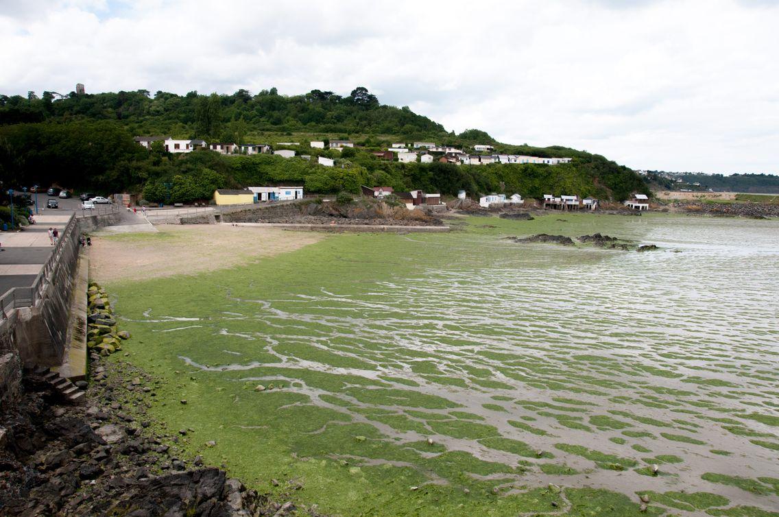 Prolifération d'algues vertes sur la plage du Valais à St Brieuc durant l'été 2017. En se décomposant, ces algues dégagent un gaz toxique appelé sulfure d'hydrogène.