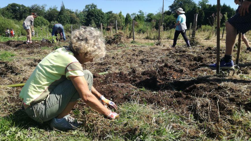 Des bénévoles plantent des courges et autres plantes dans un champs en friche du quartier Habas la Plaine à Bayonne