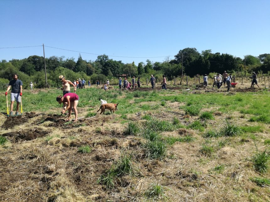 Des dizaines de volontaires travaillent la terre sur le champs laissé en friche