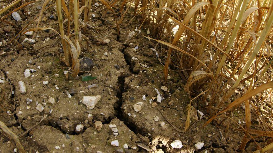 La sécheresse dans l'Yonne entraîne les premières mesures de restrictions d'eau