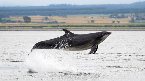 Le sonar du grand dauphin