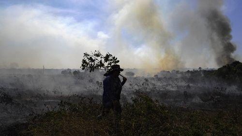 Accord avec le Mercosur : la déforestation au cœur du rejet français