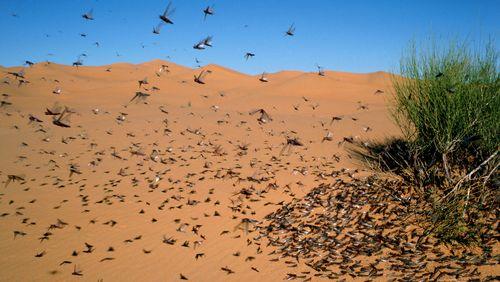Un vorace migrateur