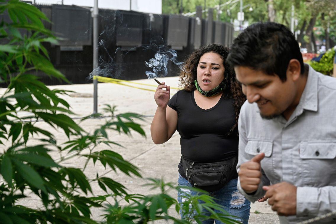Cela fait maintenant 8 mois que le mouvement cannabique mexicain campe devant le Sénat pour demander la légalisation de la marijuana.