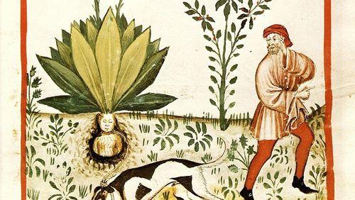 Qu'est-ce qu'une vie de plante ?
