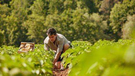 L'ANEFA de Dordogne relaie plusieurs offres d'emploi à pourvoir dans l'agriculture.