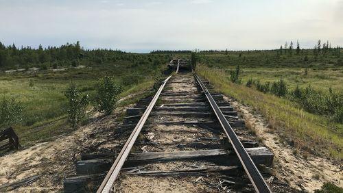 Nous sommes venus en Sibérie écouter les arbres crier