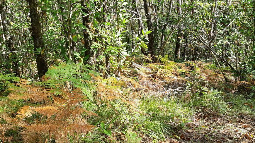 La drogue était cachée dans des bois près de Triguères et Château-Renard