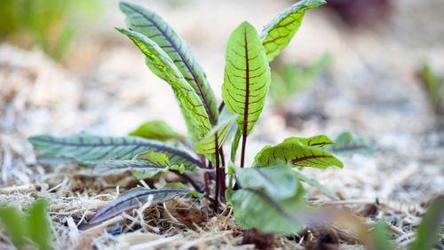 Une plante bien riche