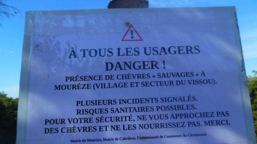 ''Ne vous approchez pas des chèvres'' précise un communiqué de la maire de Cabrières