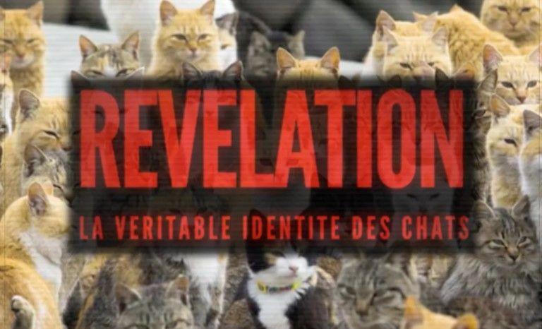 """Révélation : la véritable identité des chats, meilleure réponse au """"gloubiboulga complotiste""""."""