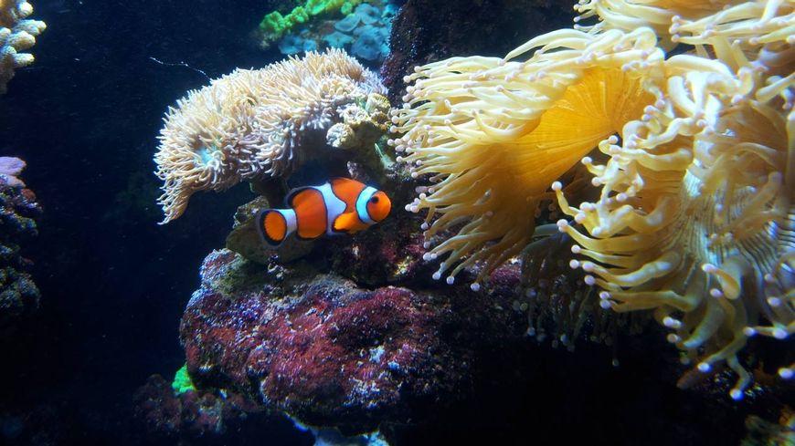 aquarium du cap d agde