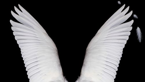 """Angels in America"" de Tony Kushner (1/2) : Le Millenium approche"