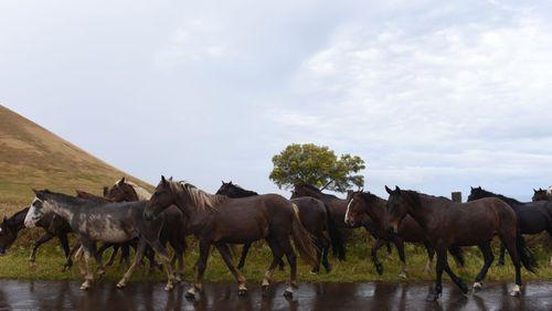 Des steppes au tiercé, le cheval