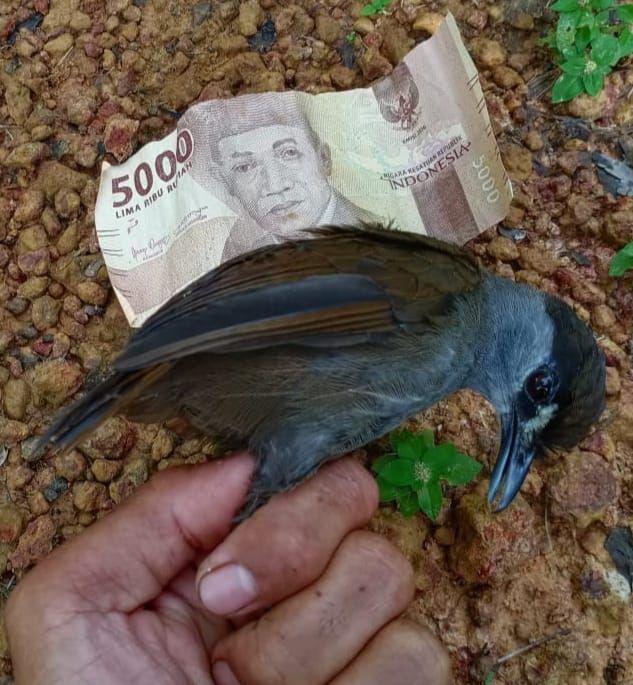 L'oiseau trouvé en octobre 2020, bien vivant, et pas plus gros qu'un billet de banque