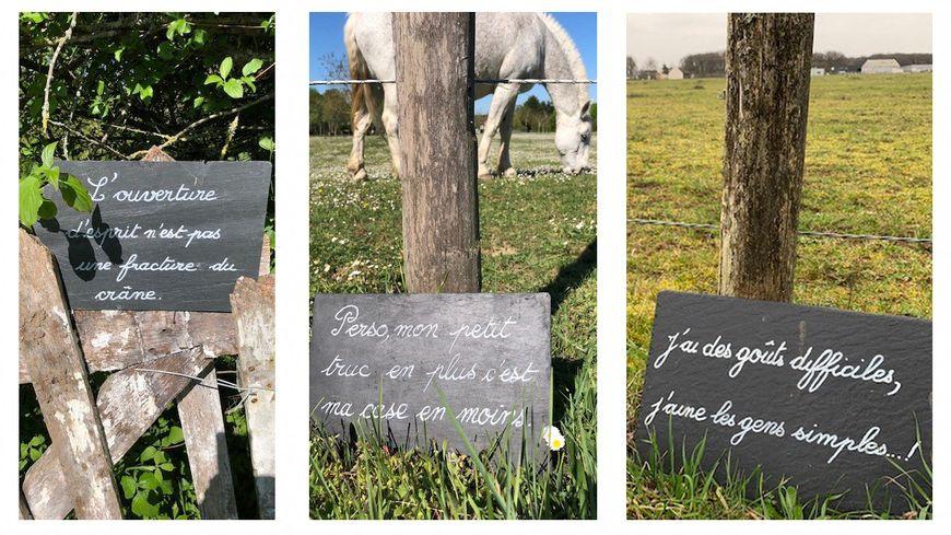 A Saint-Roch, au nord de Tours, une retraitée a déposé dans la nature une quarantaine d'ardoises portant chacune une citation drôle ou profonde
