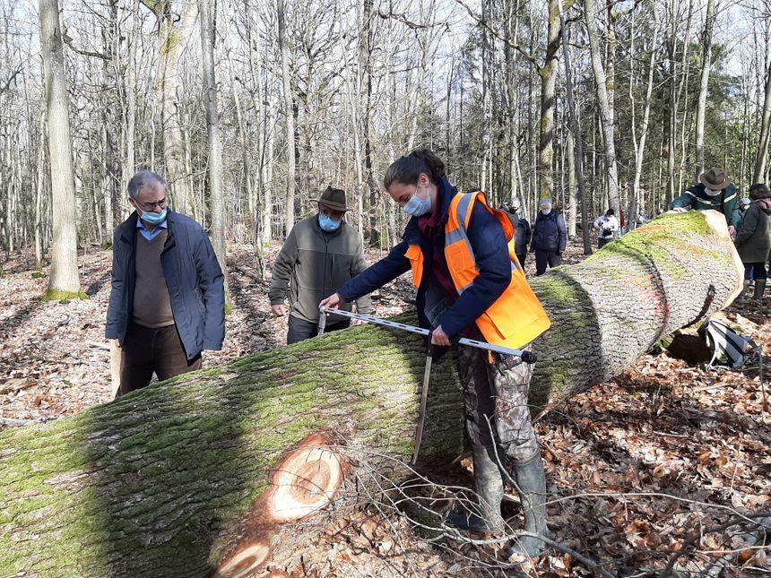 Les élus locaux sont venus assister aux opérations de l'ONF, dans une forêt qu'ils connaissent bien mais qui appartient à l'État