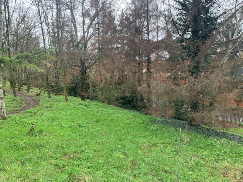 180 arbres infestés par le scolyte au parc Georges-Valbon en Seine-Saint-Denis, des abattages prévus