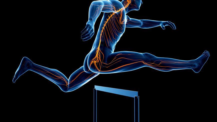 L'activité physique modifie les connexions neuronales de notre cerveau.