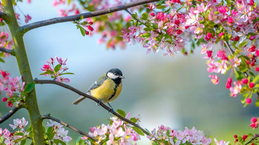 Les mots d'oc : Arriba lo printemps