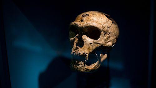 L'homme de Néandertal avait-il le même langage que nous ?