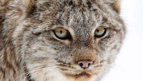 2 430 espèces menacées d'extinction en France