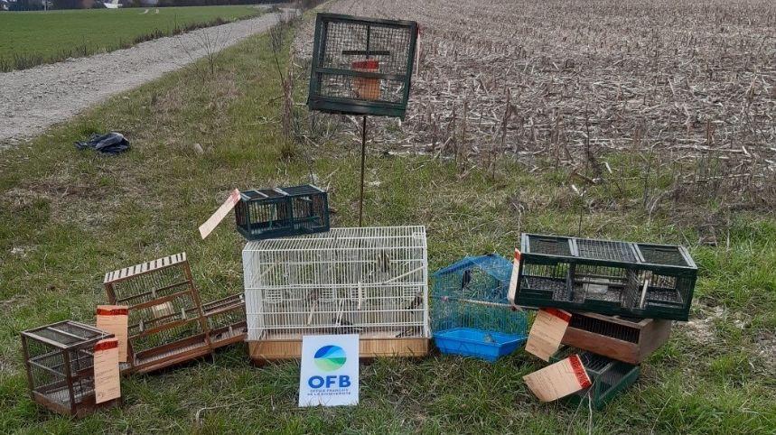 Des espèces protégées d'oiseaux saisies dans le Pas-de-Calais