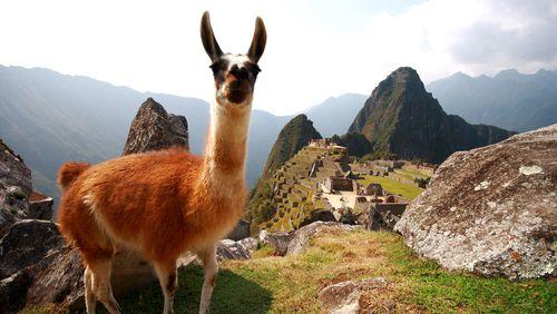 Les Amériques avant l'Amérique (4/4) : Prends ton lama, on rentre à Cuzco : le mythe inca