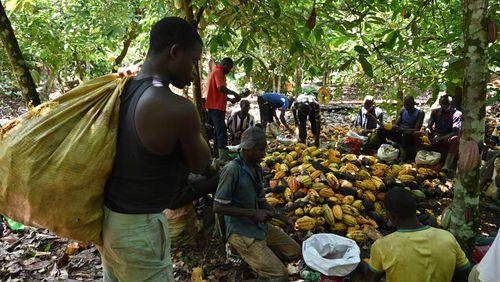 Migrations : les routes du Sud (3/4) : Côte d'Ivoire : de l'accueil au rejet de l'étranger