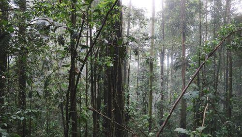Plaidoyer pour les arbres avec Francis Hallé