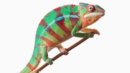 Il ne suffit pas de changer de couleur pour être un caméléon