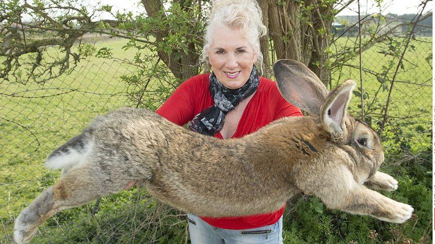 Annette Edwards a promis une récompense de 1.000 livres sterling pour son retour.
