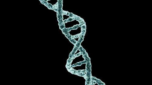 Génome Z : la découverte d'un ADN viral qui ne ressemble à aucun autre
