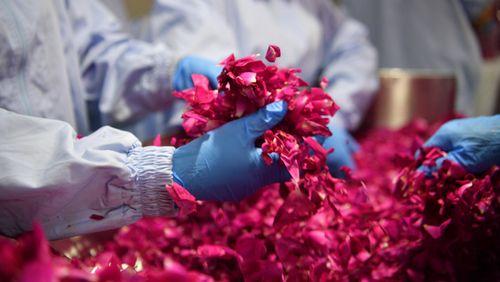 L'économie des fleurs (1/3) : Espèces végétales : le prix de la disparition